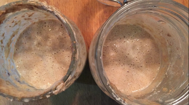 Sourdough Starter 2